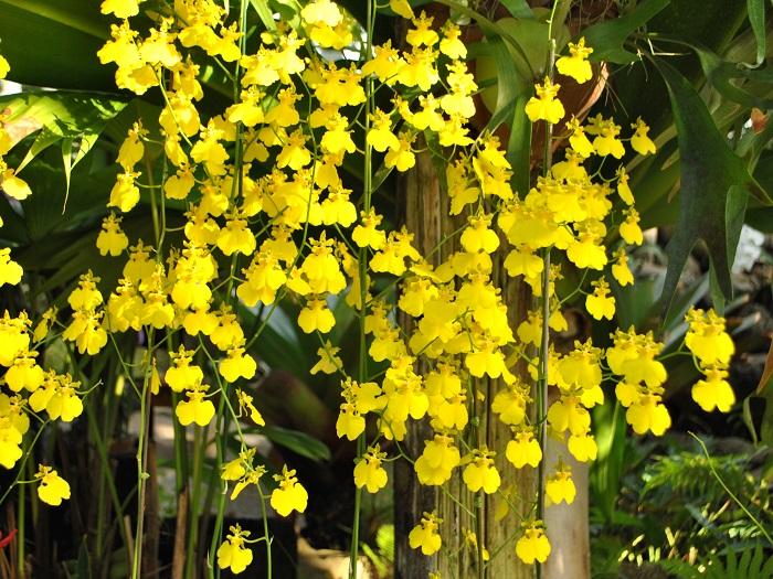 熱帯林植物室には熱帯特有の色鮮やかな植物が生息する