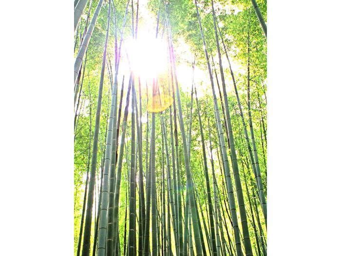 約2000本の竹林が圧巻の報国寺。人力車を降りて散策してみよう