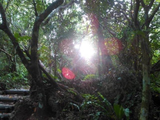 ホロホローの森