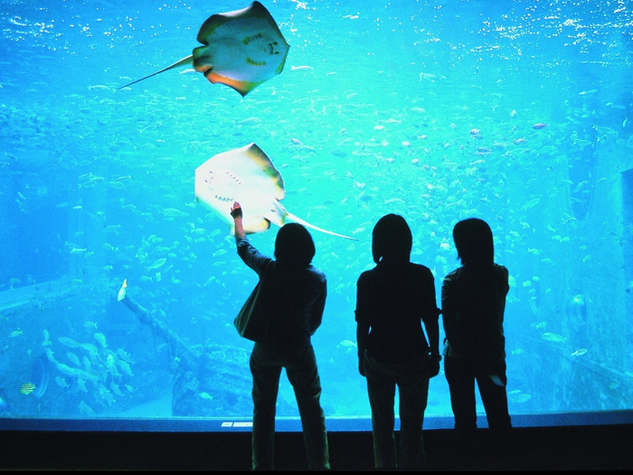 高さ7mの大水槽ではハナゴンドウ(イルカ)と魚たちが一緒に泳ぐ様子が見られる
