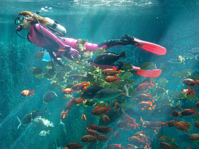 ダイバーが魚たちと一緒に泳ぐ姿は幻想的