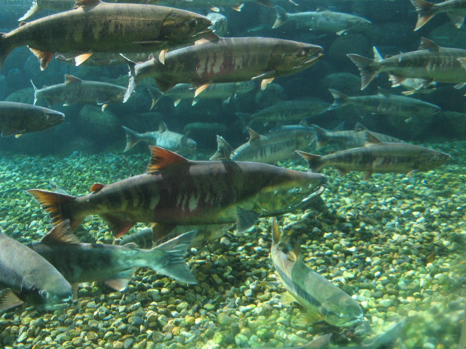 川の中の自然を観察してみよう
