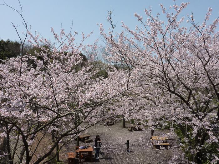 四季折々の景色~【春】ソメイヨシノ