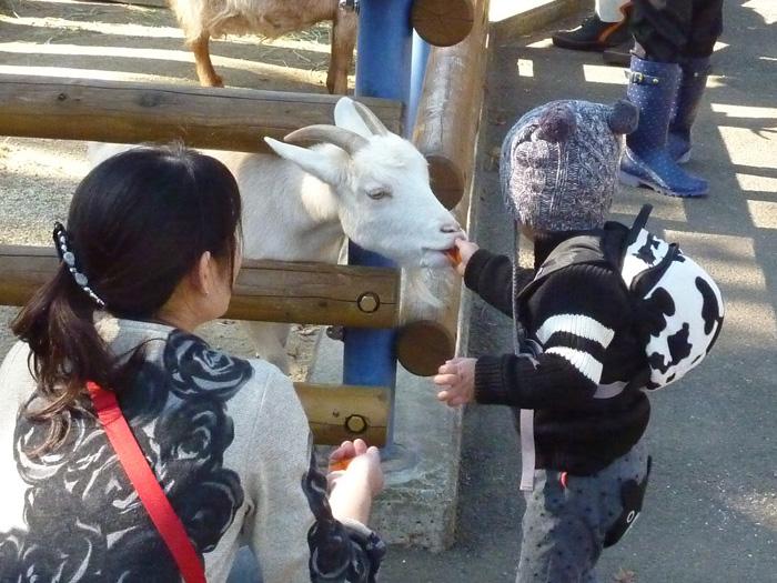 「ほのぼの動物園」でヤギにエサをあげよう
