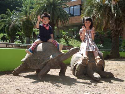 体重30kg以下の子供ならゾウガメに乗って記念撮影ができる!