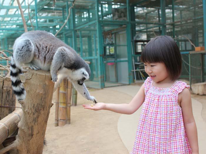 「サルのふれあい楽園」でサルとふれあうことができる