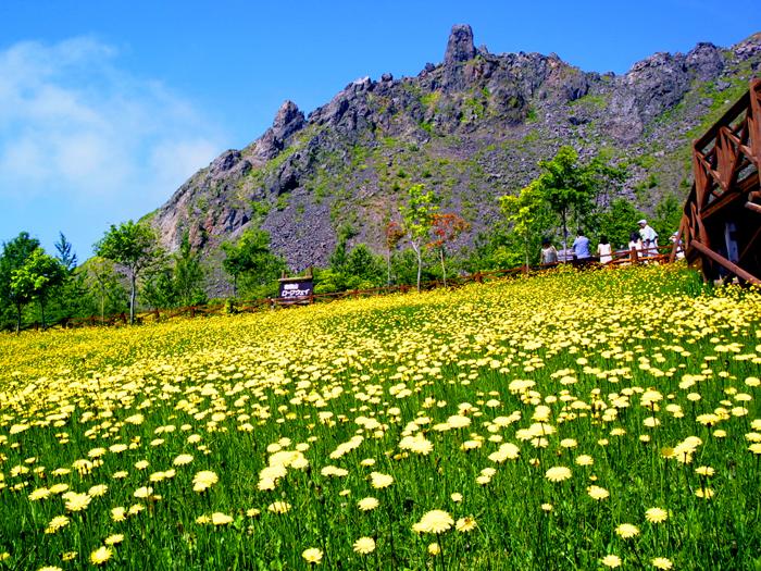 有珠山散策路と花