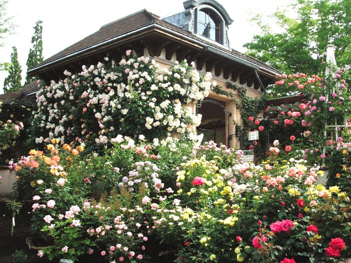 720品種のバラが咲くガーデン