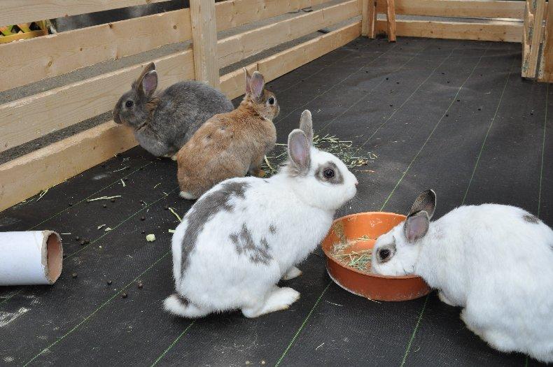 ウサギとの触れ合いも体験できる