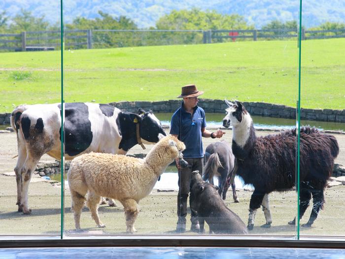 牧羊犬とまきばの仲間たち