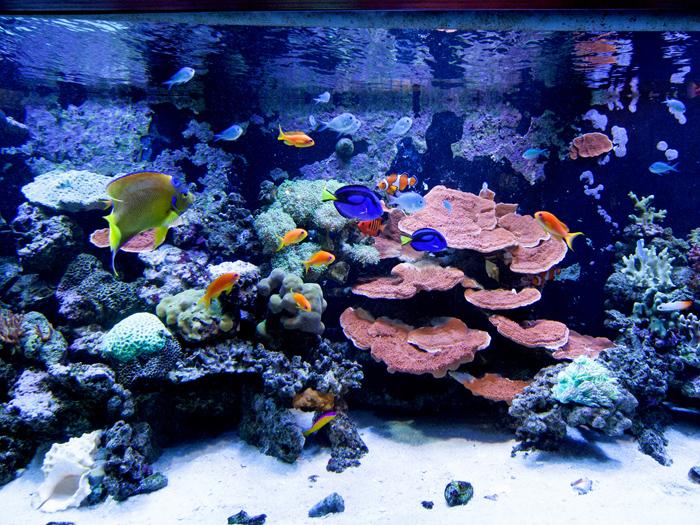 おもしろ水族館「ウエルカムゾーン」