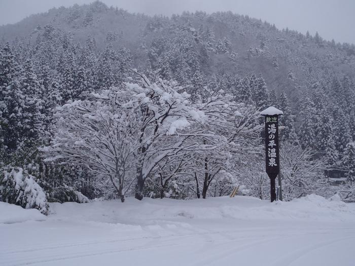 雪化粧のサクラ