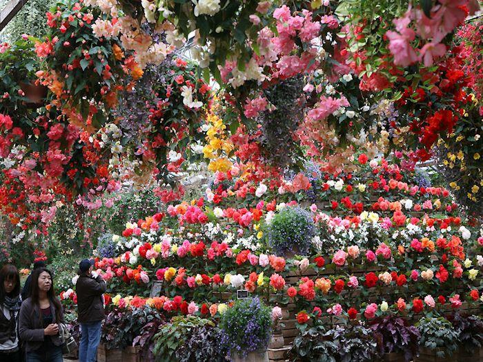 色とりどりの花が咲き誇る