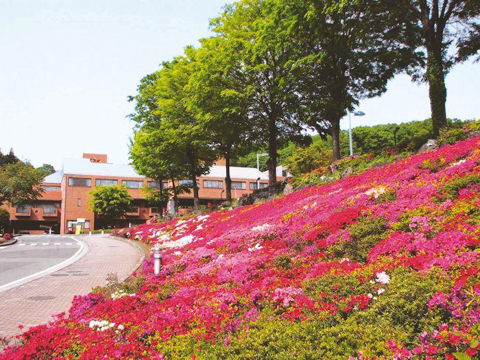 施設前を彩る美しい花々