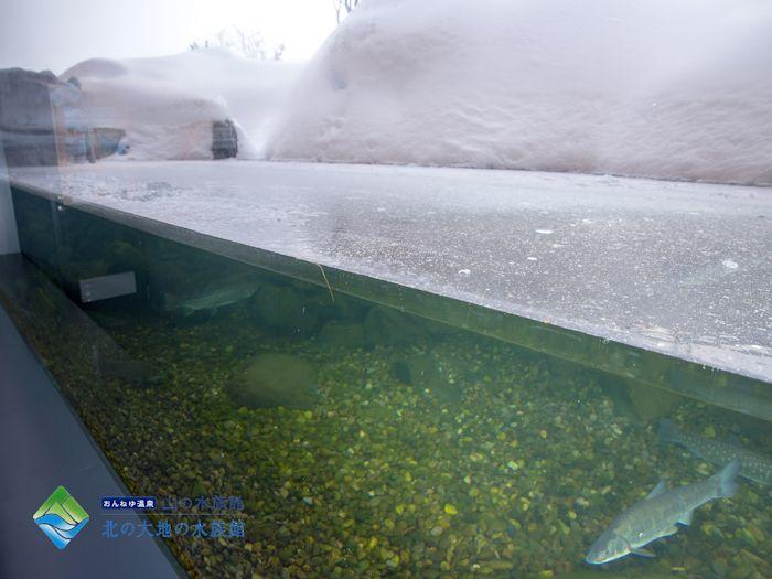 北の大地の水族館です