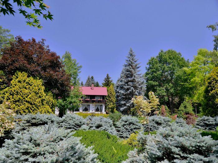 青空に映える美しい木々