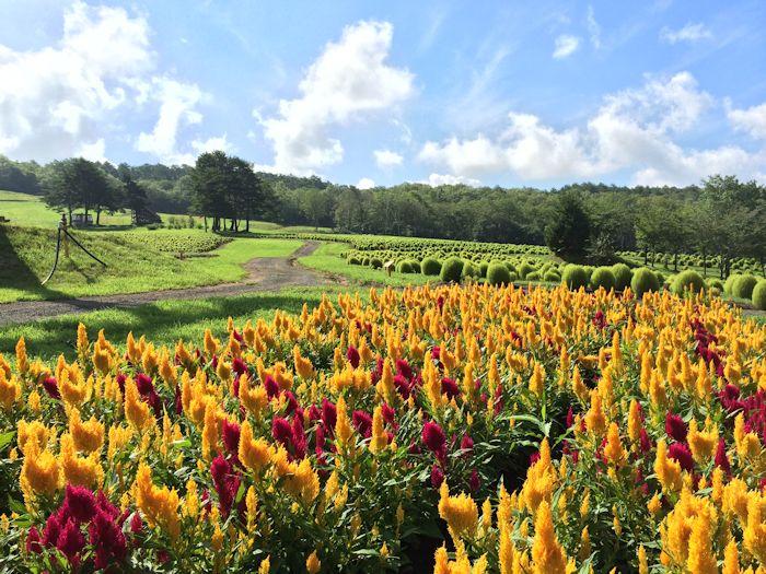 コキアや季節の草花がいっぱい