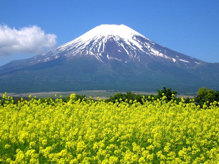 キカラシと富士山