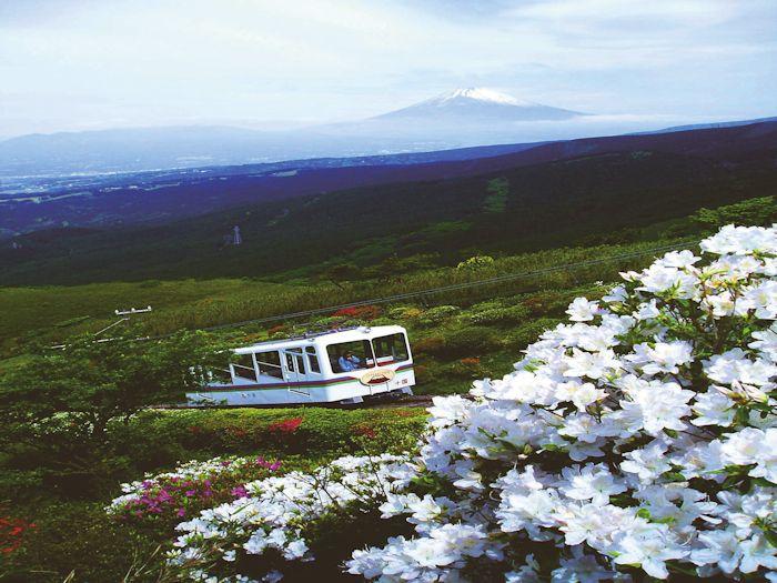 ケーブルカーからの富士山とツツジ