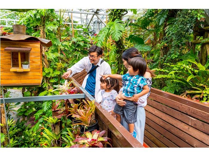 パイナップルの仲間たちの植物園
