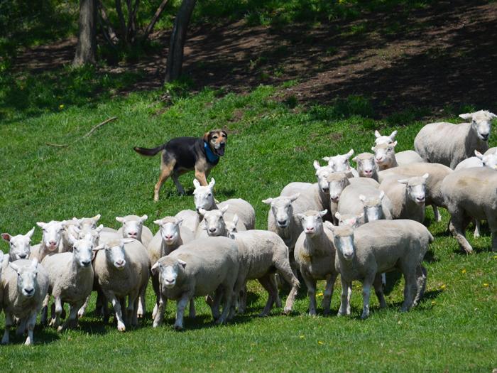 動物たちと出会えるみどりの牧場