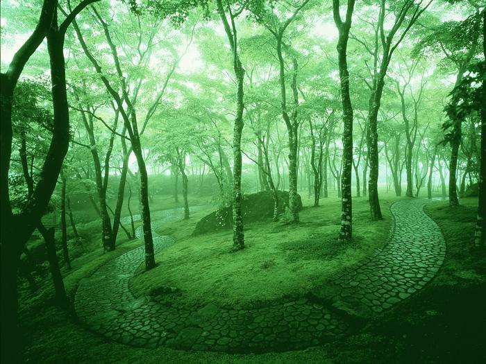 丁寧に手入れされた苔が美しい