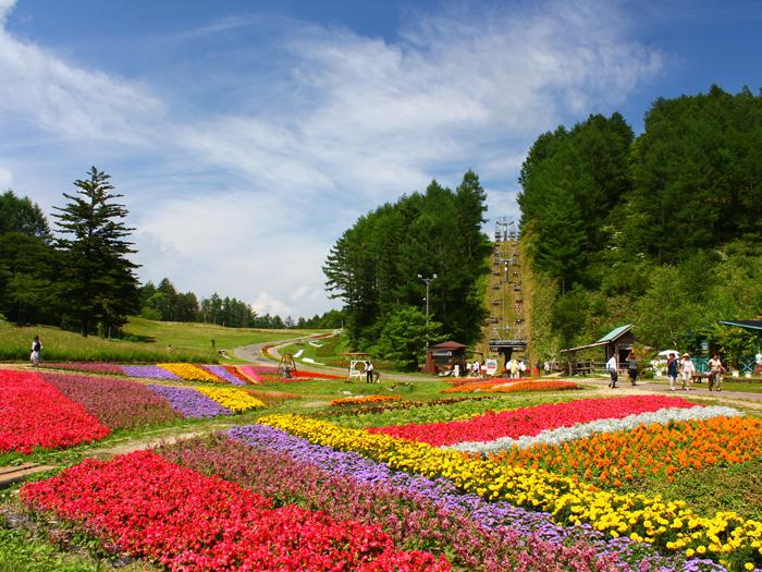 色鮮やかな花々が待っている