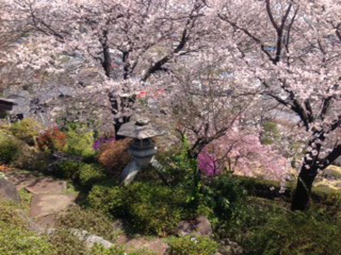 桜など四季折々の景色が楽しめる