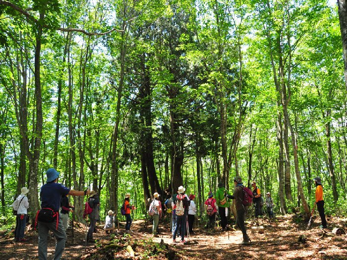 山菜を取りながら山頂のビュースポットを散策する「ねずこの森ハイキング」