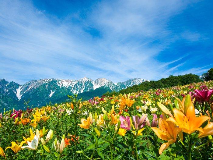 アルプスの頂上とユリ観賞が楽しめる夏の岩岳山頂
