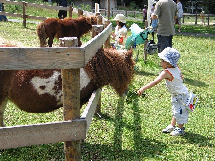 羊やウサギと触れ合える蓼科ふれあい牧場