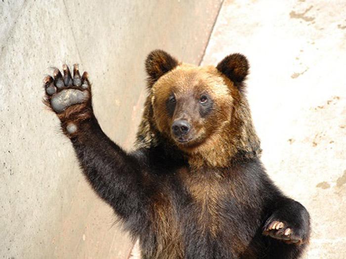 餌やり体験では立ち上がり手招きするクマも!