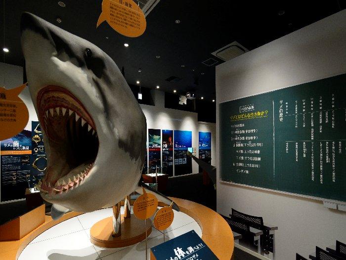 巨大なサメの模型を使い生態系を説明