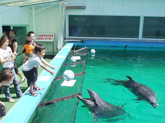 イルカと遊ぼう