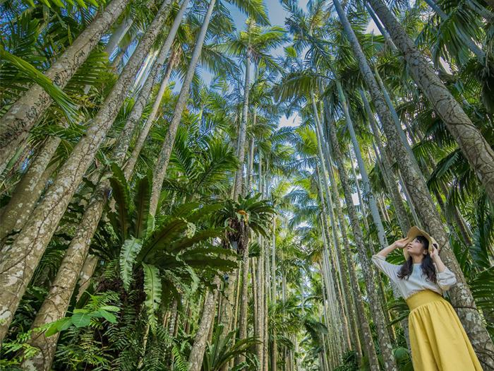 貴重な熱帯・亜熱帯の植物