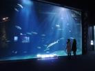 サケのふるさと千歳水族館 入館料