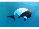 (2020年度)仙台うみの杜水族館 年間パスポート※2020年8月24日(月)~2021年3月31日(水)