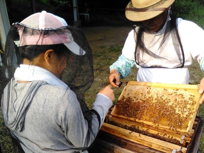 [終了]潜入!ミツバチの謎にせまる! ~ホンモノのハチミツって何?ミツバチ博士になろう!~[日帰りプラン/現地発着/自然に学ぶ]