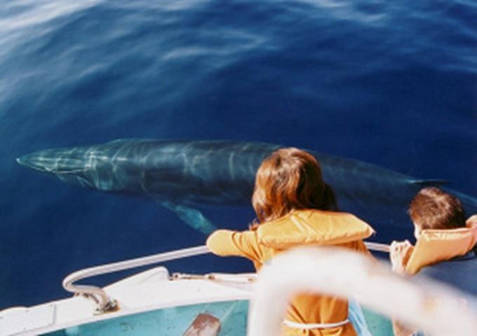 [終了]~太平洋でクジラやイルカに会える!?海を楽しみ、味わい、恵みを学ぶ旅~ホエールウォッチングと天日塩づくり&名物のカツオ藁焼きタタキを味わう!≪海と日本PROJECT 体験モニターツアーin 高知≫[高知発着/1泊2日/高知/募集型企画旅行/モニターツアー]