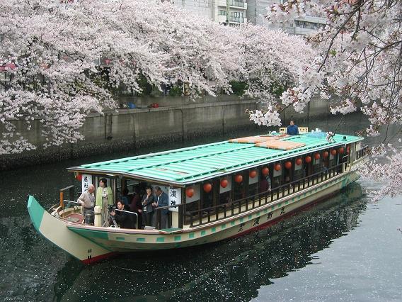 *桜屋形船*【濱進】お花見ランチクルーズ