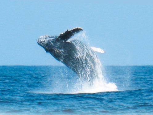 クジラガイドと行く!◎ホエールウォッチング