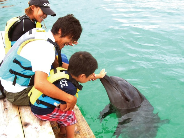 【石垣】イルカと遊ぼう!気分はトレーナー◎ドルフィンエンカウンター